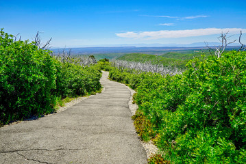 Walking Trail on Top of Colorado Mountains