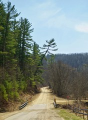 Scenic Country Road and Forest in Southern Minnesota