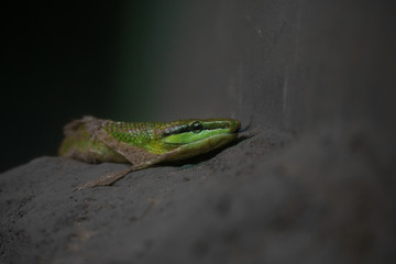 close up of green snake molting