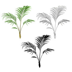 Palm decoration house plant  tropical plant natural and outline and silhouette vintage vector illustration editable hand drawn