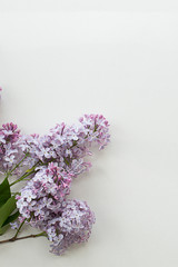 Printed roller blinds Lilac Syrínga lilac bouquet on a gray textured background