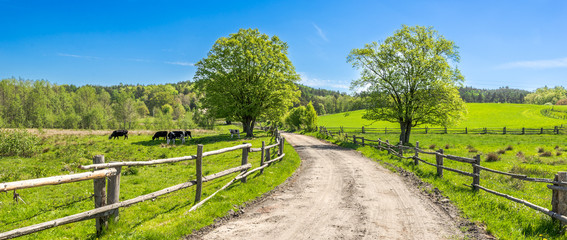 Door stickers Landscapes Countryside landscape, farm field and grass with grazing cows on pasture in rural scenery with country road, panoramic view