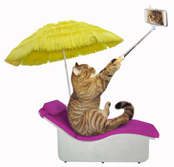 The cat under a yellow umbrella takes selfies on a sunbed. White background.