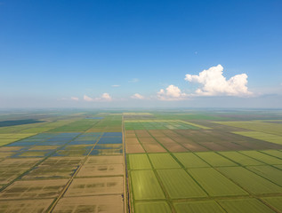 The rice fields are flooded with water. Flooded rice paddies. Agronomic methods of growing rice in the fields.