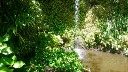 緑の中の池 Pond in plants