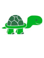 landschildkröte beine füße laufen gehen klein junges baby comic cartoon schildkröte panzer lustig süß niedlich design cool clipart