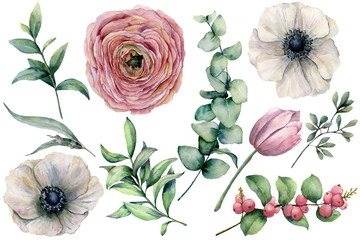 Watercolor flower set with eucalyptus leaves. Hand painted anemone, ranunculus, tulip, berries and branch isolated on white background. Natural illustration for design, print, fabric or background.