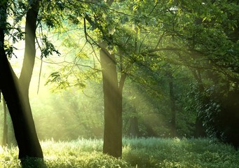 The forest and the sun rising.