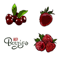 Berry Hand drawn vector set. Berry colorful marker illustration. Berries engraving doodle sketch etch line. Raspberry, strawberry, cherry on white background. Dessert Healthy farm natural product.
