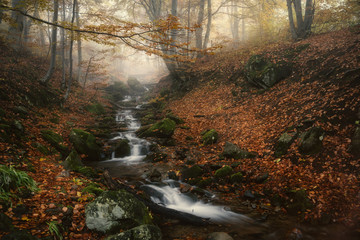 Landscape of a river flow in the mountain forest in autumn.