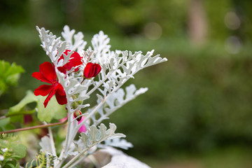 red flower on green natute background