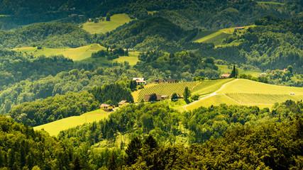Austria, Slovenia Vineyards Sulztal Herzerl Straße