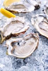 Frische Austern geöffnet mit Zitrone angeboten als Draufsicht auf Crushed Eis