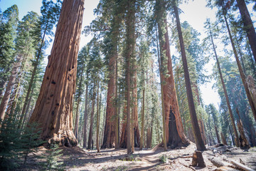Ingelijste posters Natuur Park trail in sequoia national park in late May, 2018