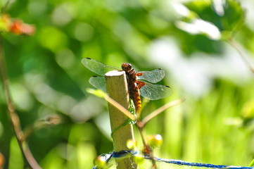 Dragonfly in sun light close up shot