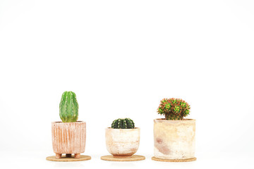 Cactus in clay pots over white background.