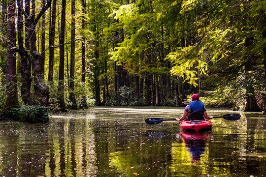 Kayaking Through the Trees