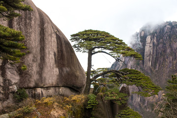 Greeting Pine tree (Ying Ke Song) on Huangshan mountain Cloud Sea Scenery in Black and White tone, East China`s Anhui Province.