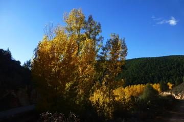 Paisaje  en otoño de Muriel , pueblo de Tamajón  en Guadalajara ( Castilla la Mancha, España)