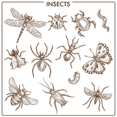 Insects that fly and creep monochrome sepia sketches