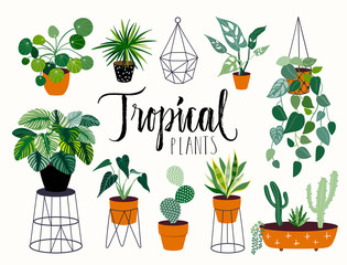 Tropical house plants collection with different elements, isolated on white and hand lettering