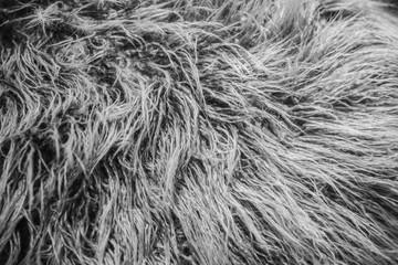 closeup animal hair fur wool feather coat