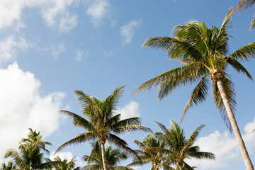 Palm trees and blue skys.