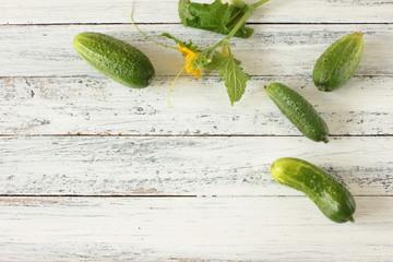 Einlegegurken Tisch Overhead Blüte Frucht Freiraum Gurken einlegen frisch grün
