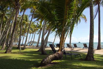 Australien, Queensland, Palm Cove, Palmenstrand