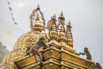 Affen klettern am Monkey Tempel