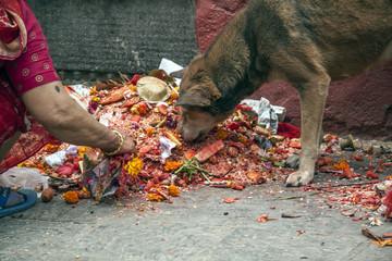 Hund und Mensch Ritual Abfall
