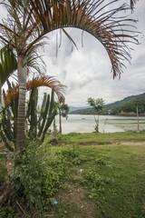 Palme vor See: Pokhara, Phewa