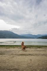 Hund vor See: Pokhara, Phewa