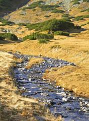 Roztoka river at  Valley of Five Lakes near Zakopane. Poland