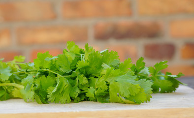 Sommerküche Kochen : Koriander grüne bund kochen gewürze sommerküche u2013 kaufen sie dieses