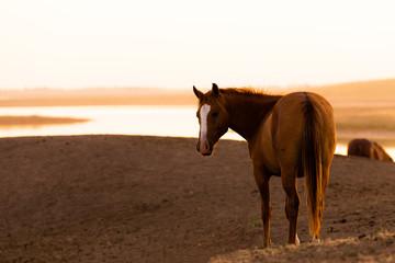 Wild horse in wildlife on golden sunset