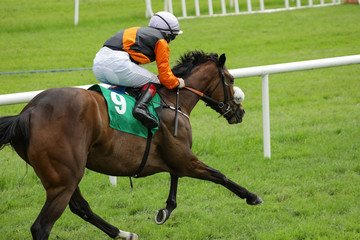 Single race horse and jockey racing down the track