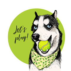 Vector portrait of Siberian husky dog with tennis ball. Let s play. Green curveball. Summer cartoon illustration. Hand drawn pet portait. Poster, t-shirt print, holiday, postcard, summertime