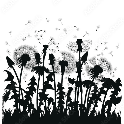 Field Of Dandelion Flowers Black Silhouettes Summer Plants On A White Background The
