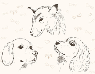 Three pencil sketches of dogs