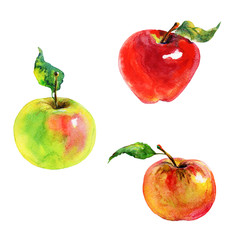 Hand drawn red, green, orange apples. Watercolor fresh fruit on white background. Painting isolated illustration
