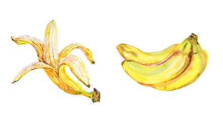 Hand drawn banana. Watercolor fresh fruit on white background. Painting isolated illustration