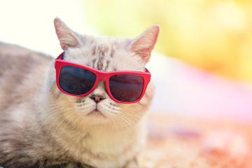 Portrait of cat wearing sunglasses lying on the beach