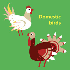 Domestic birds rooster and turkey