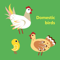 Domestic birds rooster, hen and chicken