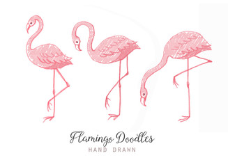 Hand drawn cartoon pink flamingo set. Cute flamingos collection. Flamingo animal exotic, nature wild fauna illustration