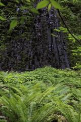 栃木県 渓谷の柱状節理