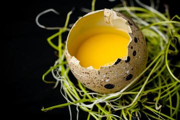 broken quail egg in a green nest. Black background