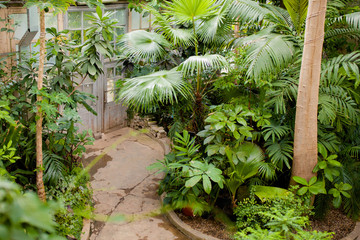 View of an old tropical greenhouse with evergreen plants.