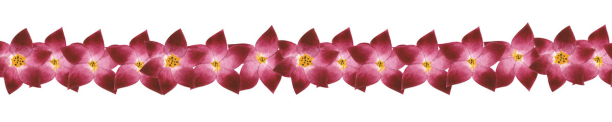 Red and pink flowers on white isolated background. Watercolor illustration. Concept. Collage